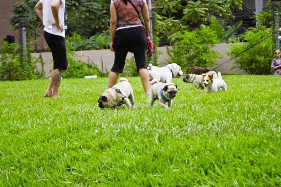 pugs airbnb