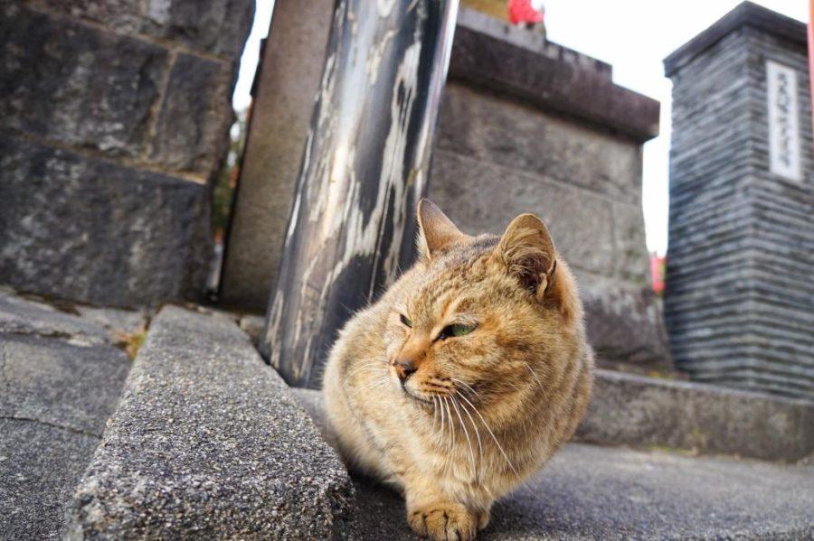 Kyoto Fox Shrine
