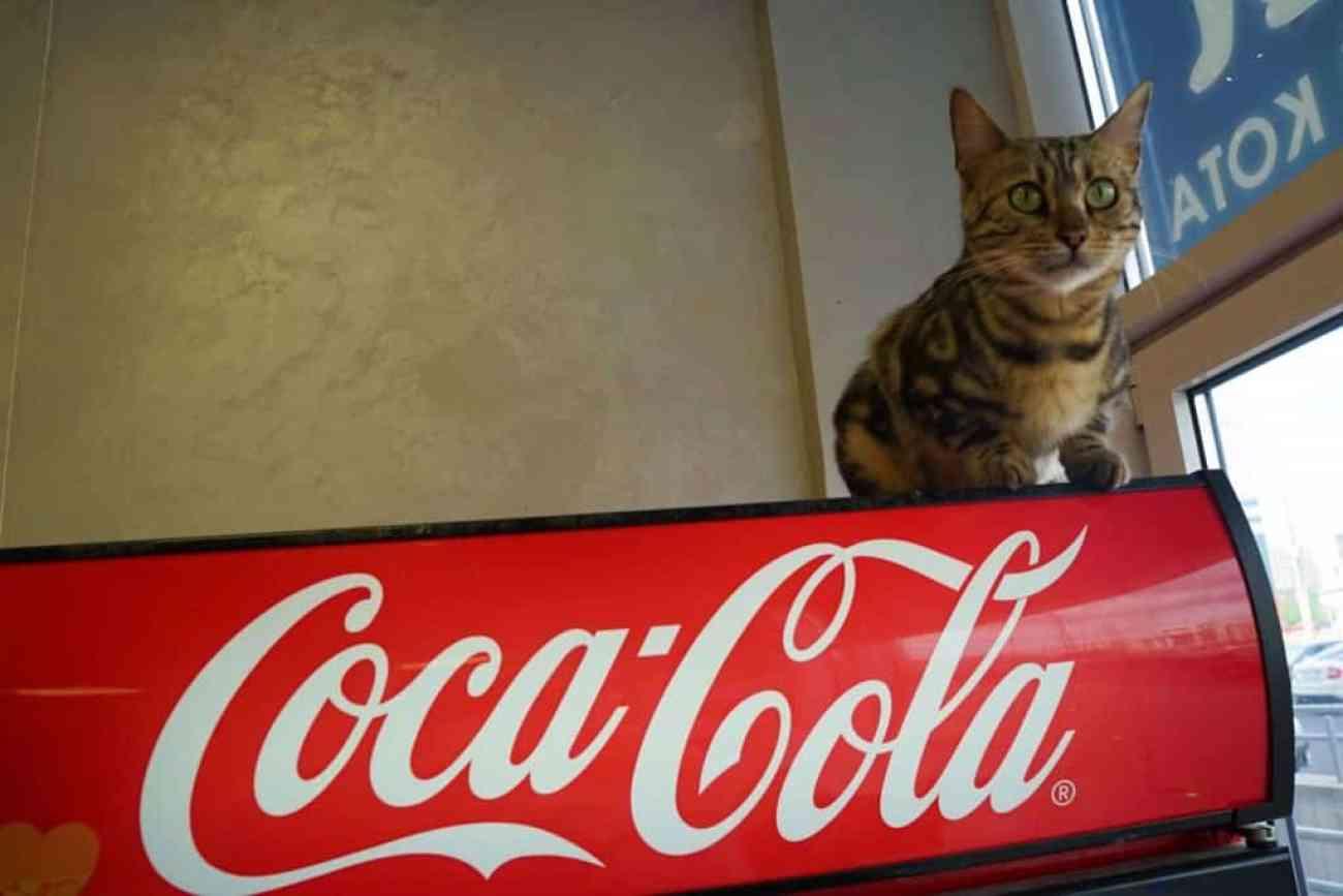 Minsk Cat Cafe