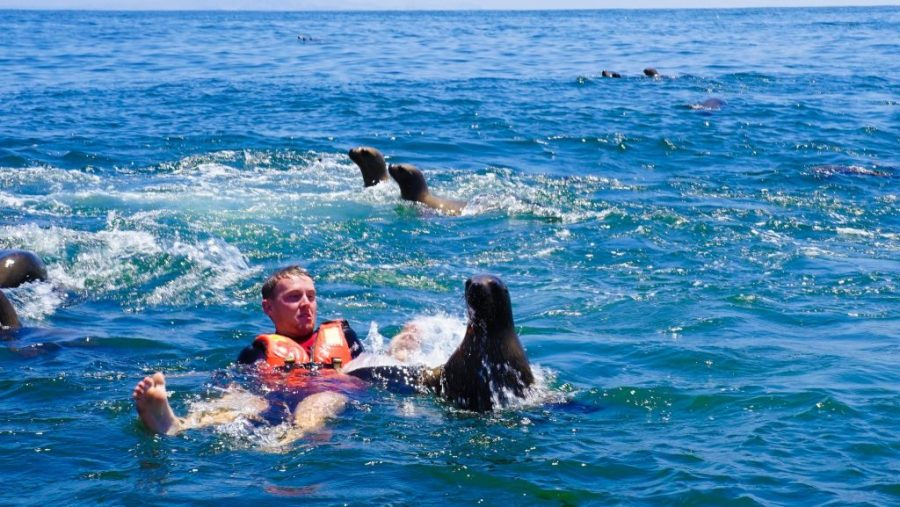 Swimming with Sea Lions in Lima