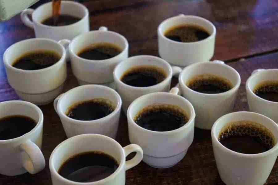 What to do in Salento? The Finca Don Eduardo Coffee Tour Salento gives the perfect taste to the Colombia coffee triangle.