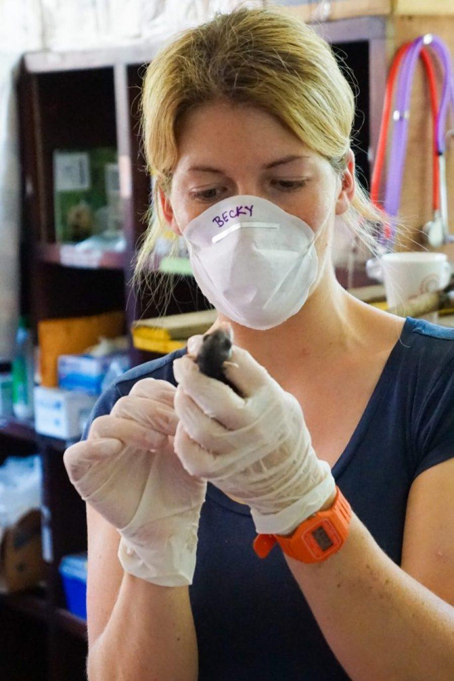 volunteering with wildlife in Costa Rica