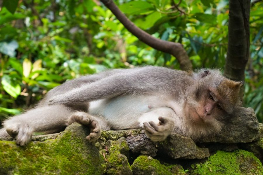 30 Reasons That Will Make You Desperate To Travel to Indonesia! - Monkey Temple Ubud