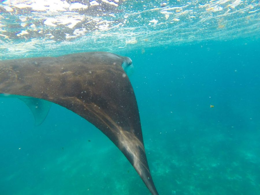 30 Reasons That Will Make You Desperate To Travel to Indonesia! Manta Rays Komodo Islands