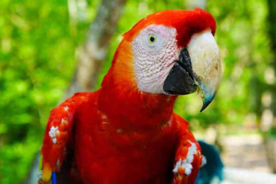 Copan Macaw Mountain
