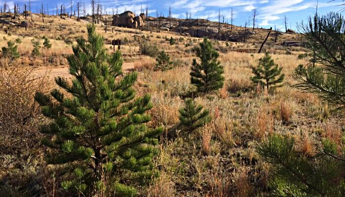 enterprise csr reforestation initiative planting 50m trees, from enterprise