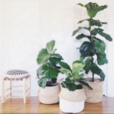15+ Amazing Nature Decoration In Your Home With Beautiful Indoor Plants Idea 10