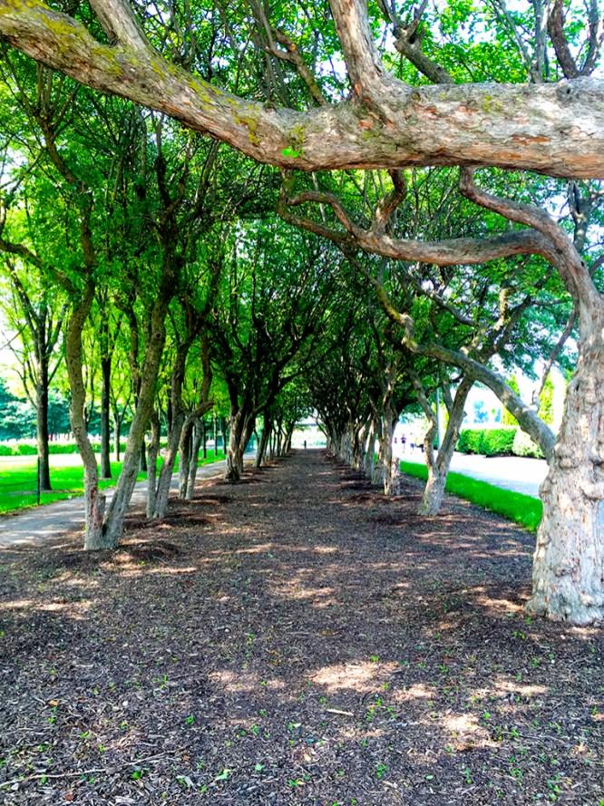 Grant Park Chicago
