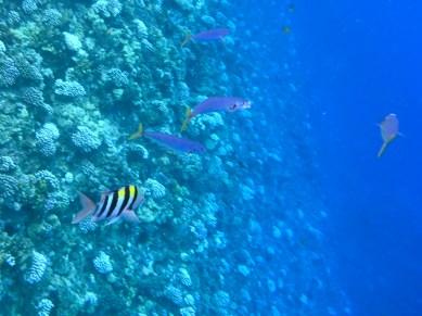 Kids Snorkeling Back Side of Molokini