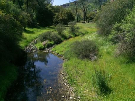 Creek And Spring Meadow at Pinnacles National Park
