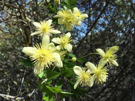 Pinnacles Spring Flowers In Bloom