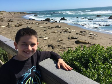 Viewing Elephant Seals Along The Pacific Coast Highway