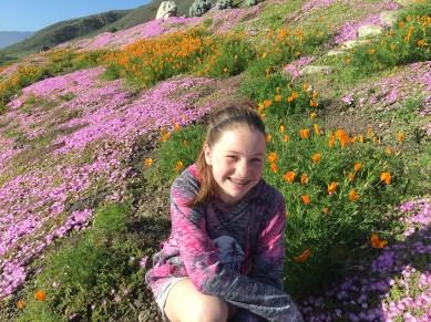 Flowers Along The Big Sur Pacific Coast