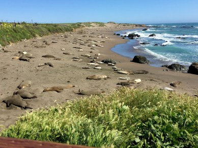 Protected Elephant Seal Viewing Boardwalk