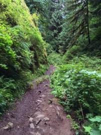 Fairy Falls Hiking Trail Through Wahkeena Canyon
