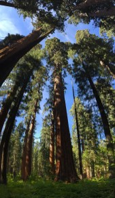 North Grove Trail at Calaveras Big Trees State Park