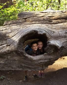 North Grove Trail at Calaveras Big Trees