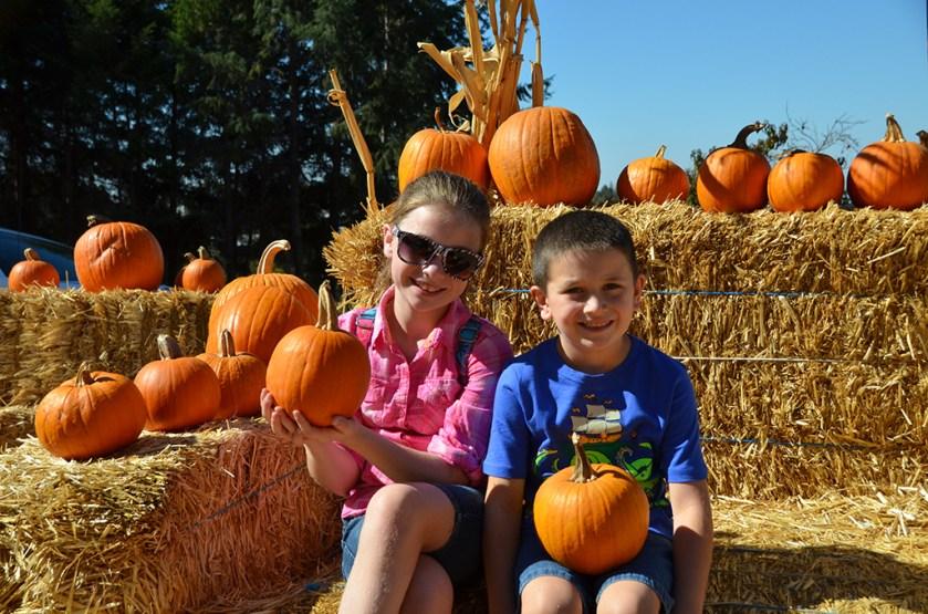 Apple Hill Pumpkin Patch