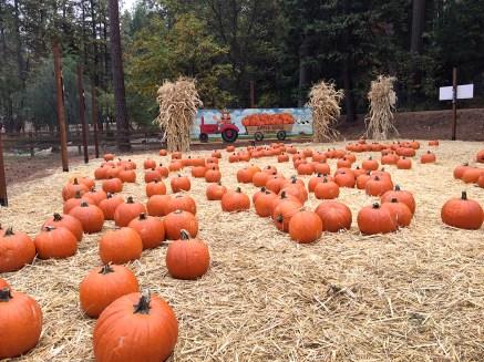 Apple Ridge Farms Pumpkin Patch