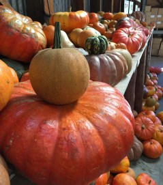 Rainbow Orchard Fall Gourds and Pumpkins