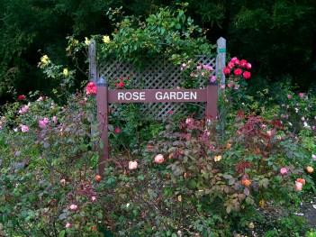 Visit The Golden Gate Park Rose Garden
