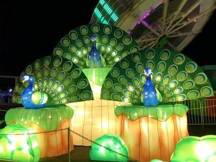 Lantern Festival Peacocks in Sacramento