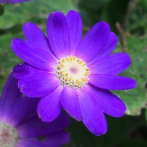 dutch-windmill-flowers