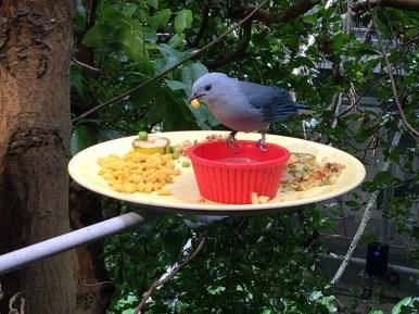 Birds Eating in the Osher Rainforest Exhibit