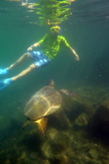 Kids Swimming With Sea Turtles