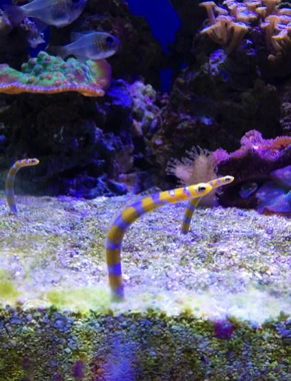 Sea Worms at the Golden gate Park Aquarium