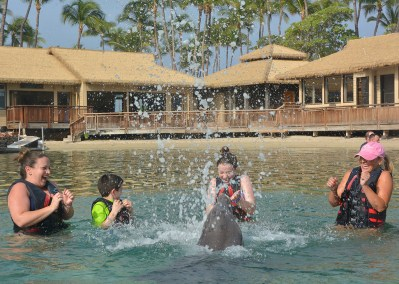 Getting Splashed by a Dolphin in Hawaii