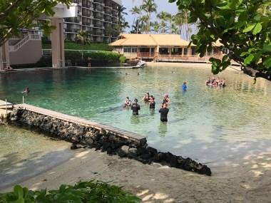 Hilton Waikoloa Village Dolphin Quest