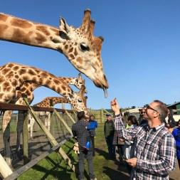 Brian Bourn Feeding Giraffes at B Bryan Preserve