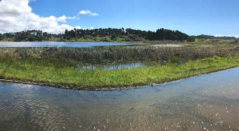 Lake Cleone Wetlands Area