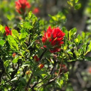 spring-flowers-northern-california-coast