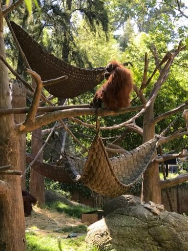 Sacramento Zoo Ape