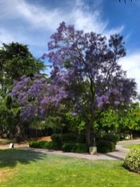 Santa Clara University Grounds