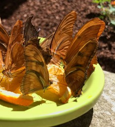 Butterflies Exhibit at the Turtle Bay Museum
