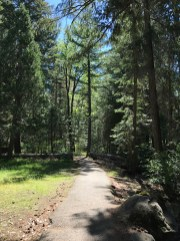 Partial Paved Trail along the McCloud River