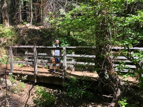 Placer Big Trees Grove Trail Bridge
