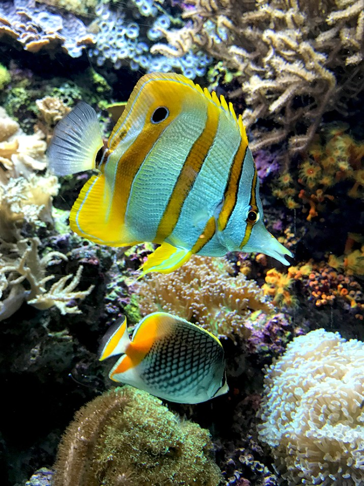 Tropical Fish Wild Reff Exhibit at the Shedd Aquarium