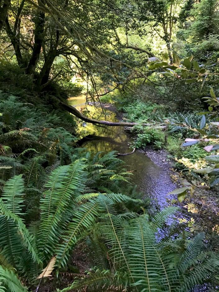 Creek Along The The Revelation Trail