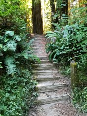 Stairs to Redwood Grove