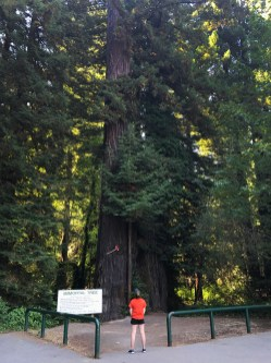 Natalie Bourn Standing In Front of the Immortal Redwood Tree
