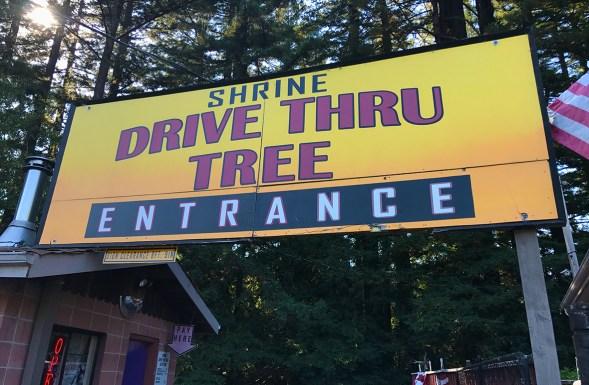 Shrine Drive Thru Tree Entrance Sign