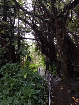 Waterfall Trail on the Big Island Of Hawaii