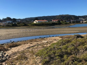 Restored Marsh Habitat in Crissy Field