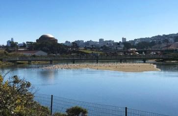 San Francisco Wetlands