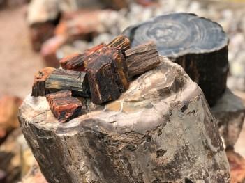 Arizona Petrified Wood