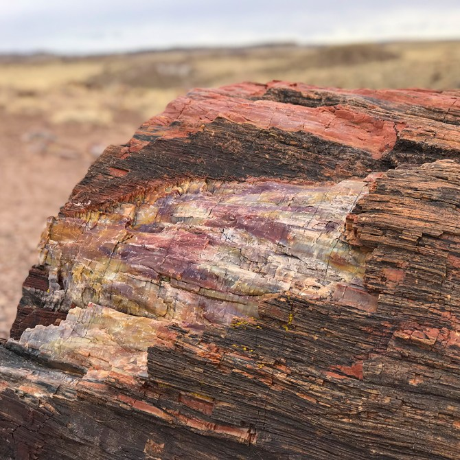 Rainbow Petrified Wood